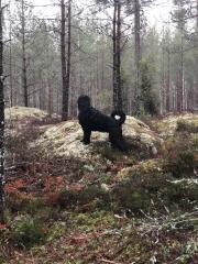 Åsa Lindblad - Blandade fritidsäventyr 12