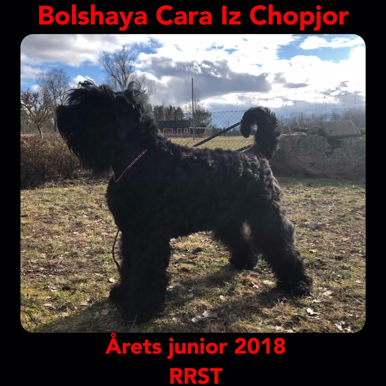 Arets Junior 2018
