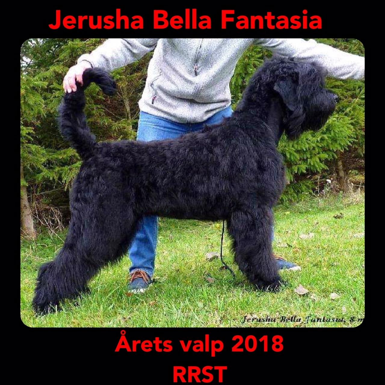 Arets Valp 2018
